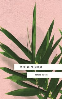 Evening Primrose book cover