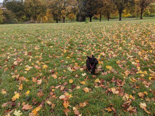 dog walk October