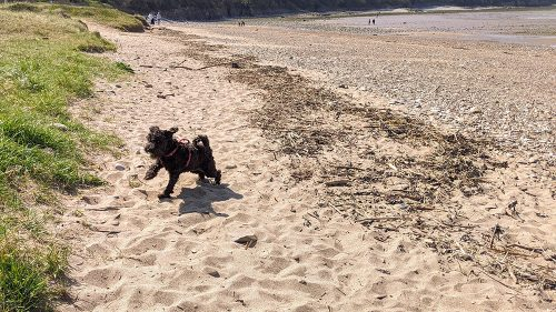 Beckett at the beach